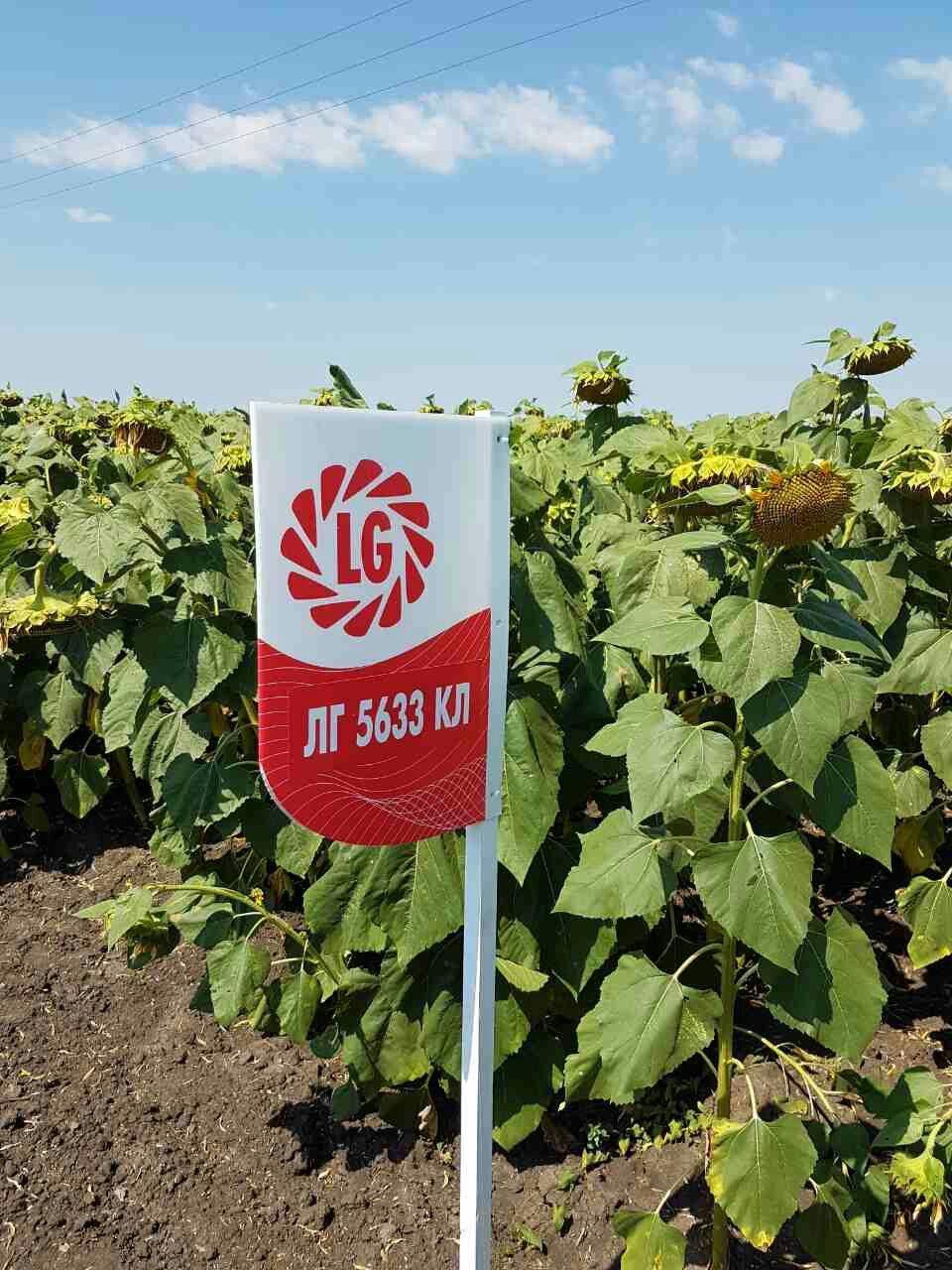 Семена подсолнечника Лимагрейн ЛГ 5633 КЛ (Limagrain)
