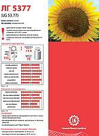 Семена подсолнечника Лимагрейн ЛГ 5377 (Классический)