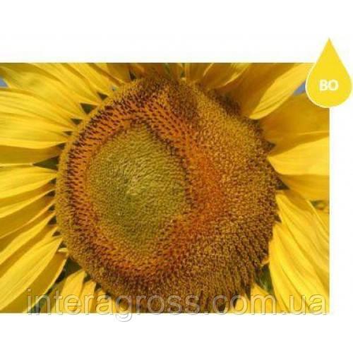 Семена подсолнечника НXK12M010