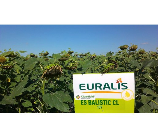 Семена подсолнечника ЕС Балистик Евралис