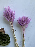Лагурус сухоцвет лиловый 50 шт
