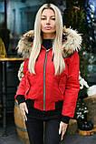 Куртка женская зимняя короткая с натуральным мехом.  Цвет: красный,бутылка, пудра, фото 5