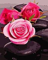 """Картина по номерам """"Розы на камнях"""" 40*50см"""