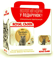 Royal Canin BRITISH SHORTHAIR Adult 2 кг + 3 пауча Royal Canin BRITISH SHORTHAIR Adult 85 г