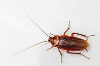 Гель от тараканов и муравьев