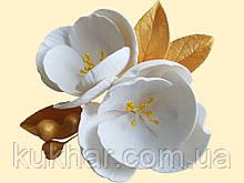 Магнолія біла з золотим листям