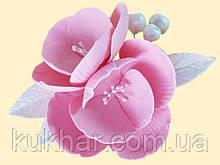 Магнолія рожева з срібним листям