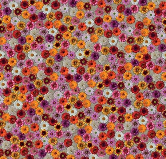 Ковролін флокіроване покриття Flotex Vision Image 000538 multifloral