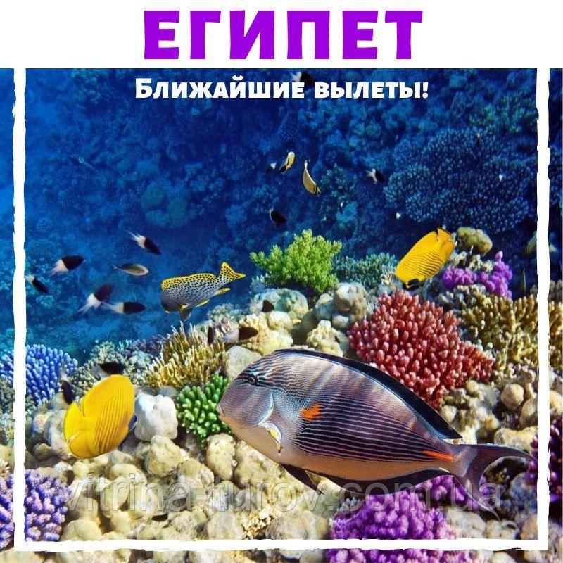 ЕГИПЕТ - ближайшие вылеты в любимые отели!