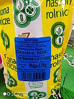 Семена клевера белого декоративного, 0.5 кг Польша
