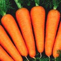Семена моркови Абако F1, 1 млн. семян /1000000 сем — ранний гибрид, тип Шантане, фр. 2,2-2,4