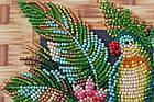 Набор-миди для вышивки бисером Попугаи лори (20 х 20 см) Абрис Арт AMB-029, фото 4