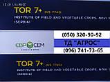 Посухостійкий соняшник Тор 7+ стійкий до рас вовчка A-G+. Врожайність гібрида НС 7749 50ц/га Преміум фракція., фото 3