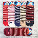 Шкарпетки жіночі смугасті коти, фото 3