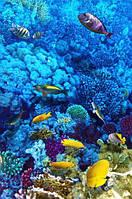 Глянцевые Фотообои голубой подводный мир разные текстуры , индивидуальный размер
