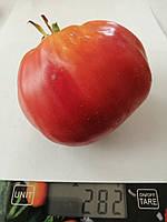 Семена томатов Анжела гигант