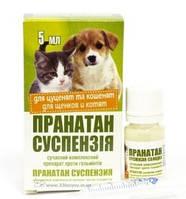Пранатан суспензия от глистов для котят и щенков 5 мл