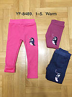 Лосины на меху для девочек оптом, F&D, 1-5 лет,  № YF-8489, фото 1