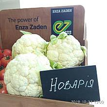 Семена капусты цветной Новария F1 (2500 сем.) Enza Zaden