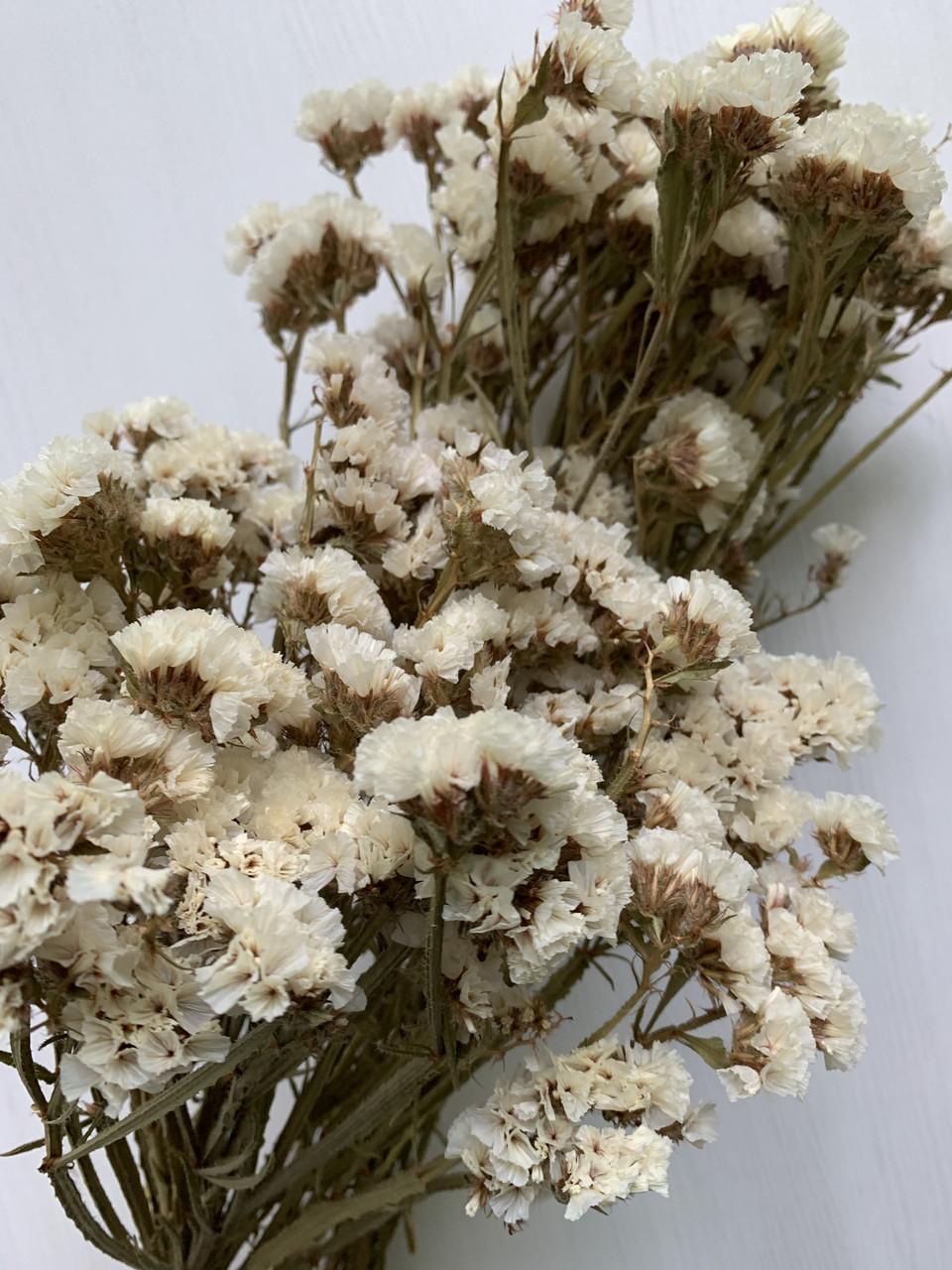 Статица  белаясухоцвет
