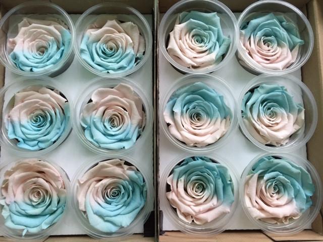 Роза стабилизированная персиковая / голубая