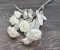 Гілка дрібних троянд в снігу. айворі, фото 1