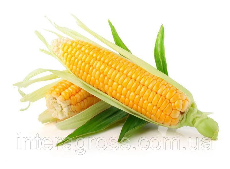 Купить Насіння кукурудзи Орфеус