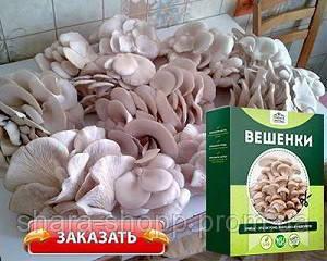 🔥 Диво грибниця, готовий засіяний міцелій для вирощування грибів вдома 6 видів 🔥