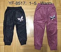 Спортивные велюровые брюки утепленные для девочек F&D оптом, 1-5 лет. Артикул: YF8517, фото 1
