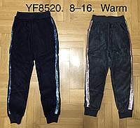 Спортивные велюровые брюки утепленные для девочек F&D оптом, 8-16 лет. Артикул: YF8520, фото 1