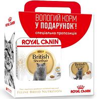 Роял Канин Британских короткошерстных Royal Canin British Shorthair сухой корм для кошек 2 кг + 3 пауча