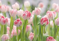 "Фотообои 368х254cм, KOMAR ""Secret Garden"" (8-708)"