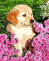 Художественный творческий набор, картина по номерам Озорник, 40x50 см, «Art Story» (AS0558), фото 1