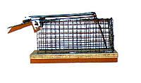 Мышеловка Amex ловушка