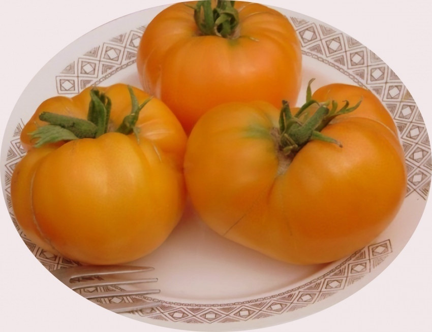 Томат Клондайк оранжевый