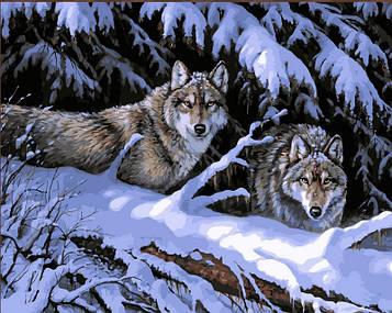 Картина за номерами 40×50 див. Babylon Вовки в лісі Художник Миллетт Розмарі (VP121)