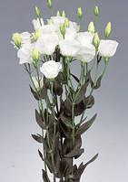 Excalibur 2 Pure White