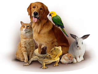 Товары для домашних животных и птиц
