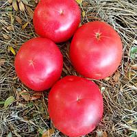 Пинк Уникум F1 (Pink Unicum F1) семена томата розового Seminis 1000 семян