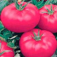 Розовое наслаждение семена томата индет. розового Semenaoptom 250 семян