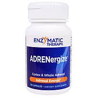 Підтримка надниркових залоз, Enzymatic Therapy, 50 капс., фото 1