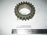 Шестерня ведена 3 діапазону КПП ЮМЗ 8270 75-1701116-Б, фото 2