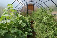 Гигиена в теплице в период выращивания