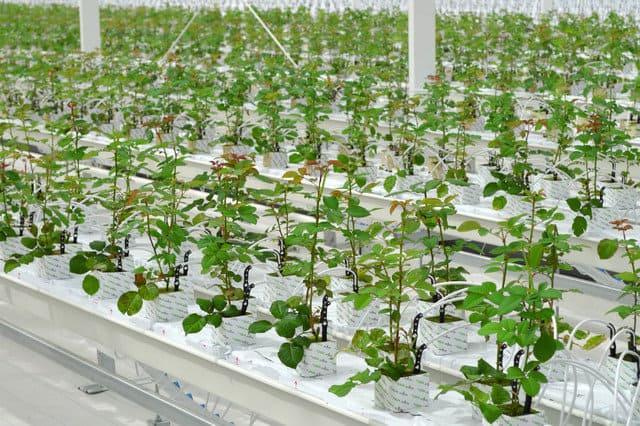 гидропонные агротехнологии