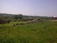 Спил, кронирование деревьев