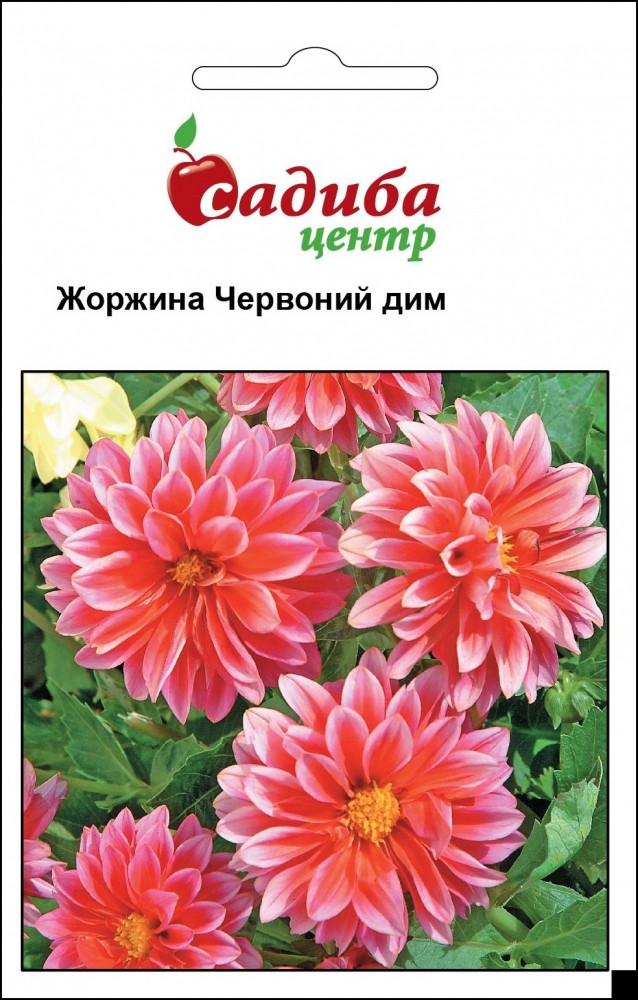 Уцінка (термін до 01.2021 р) Жоржина Червоний Дім 0,1 р. СЦ