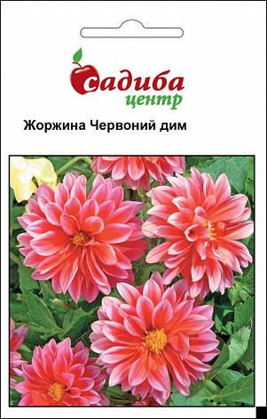 Уцінка (термін до 01.2021 р) Жоржина Червоний Дім 0,1 р. СЦ, фото 2