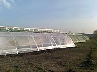 Солнечный вегетарий. Экономично, выгодно, эффективно. Часть1