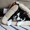 Kitty Shack Домик-лежанка для собак и кошек  (V-S)
