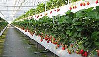 Хочу хороший урожай - какую теплицу выбрать?